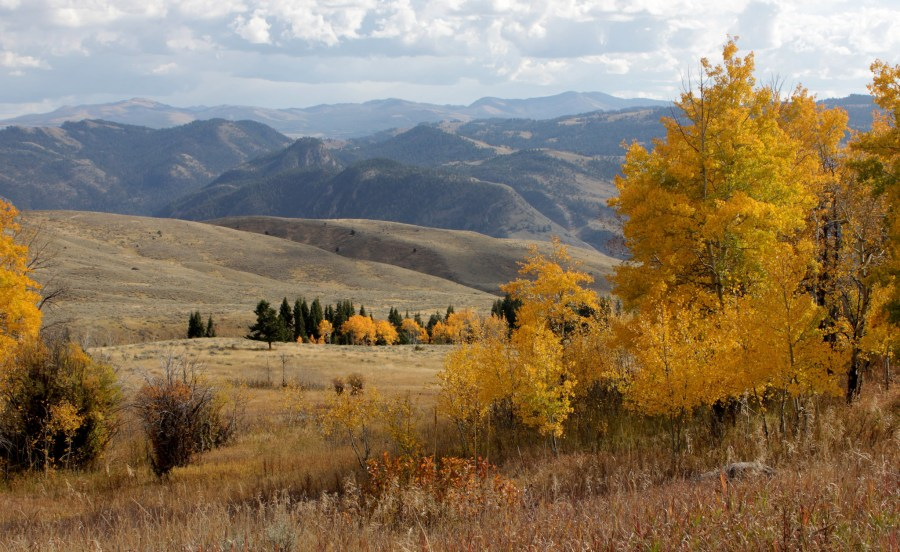 Autumn_colors_Gallatin_forest