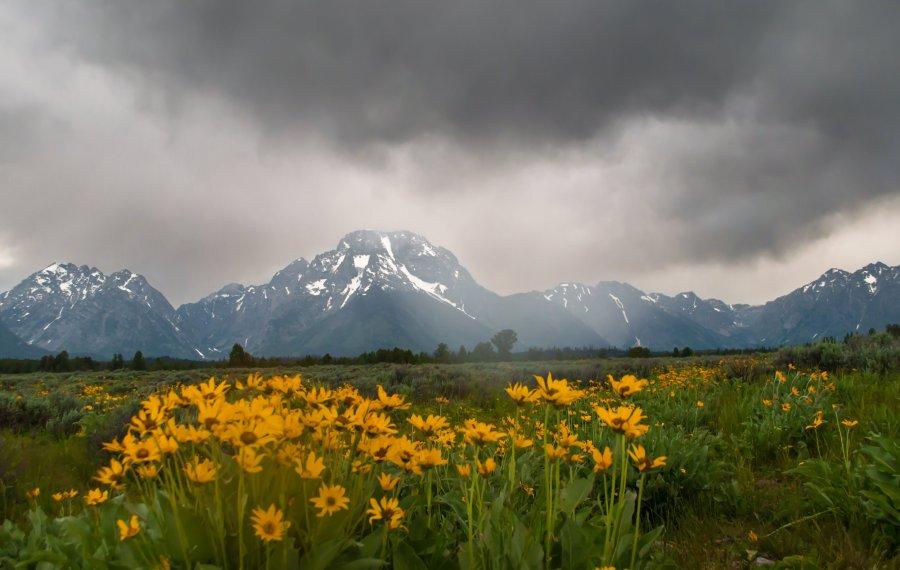 Yellowstone+2015+-4181
